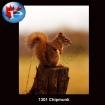 1301 Chipmunk