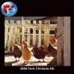2056 Farm Chickens