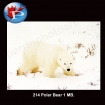 214 Polar Bear 1