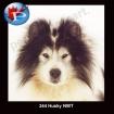 344~0 Husky