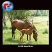 5569 New Born