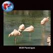 6639 Flamingo