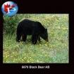 6670 Black Bear