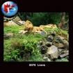 8076 Lions