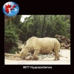 8077 Rhinoceros