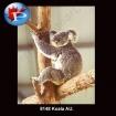 8148 Koala