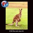8192 Roo and Joey