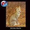 9512 Nice Kitty
